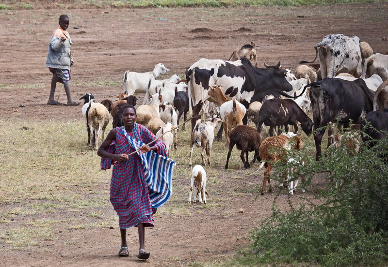 large_Maasai_Boys_1.jpg