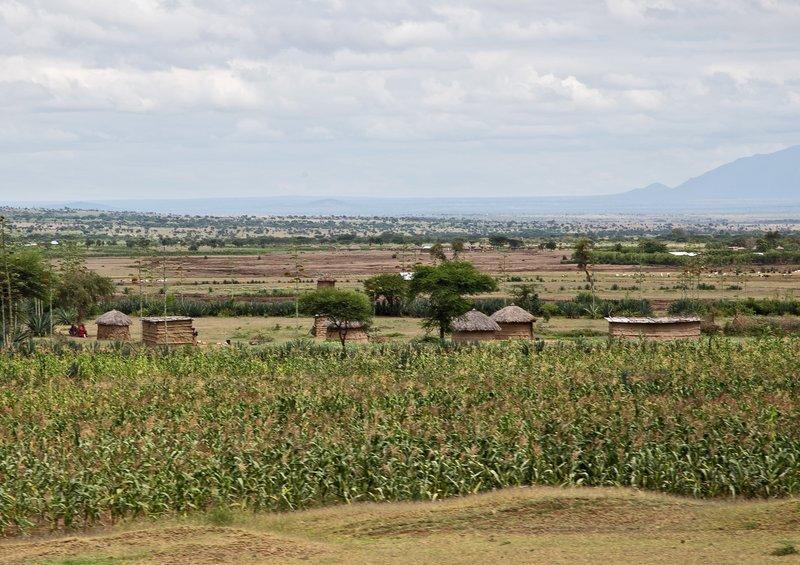large_Maasai_Man..has_7_wives.jpg