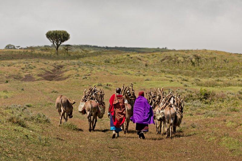 large_Maasai_and_Donkeys_1.jpg
