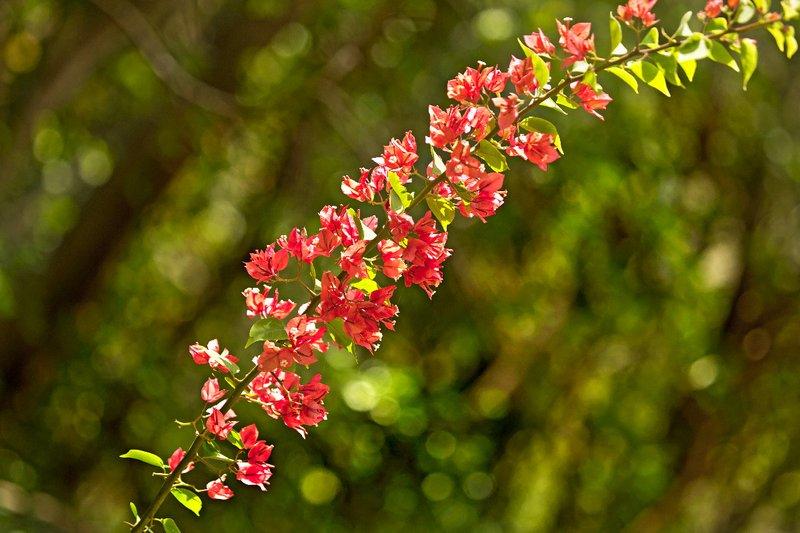 large_Mamiku_Gardens_17.jpg