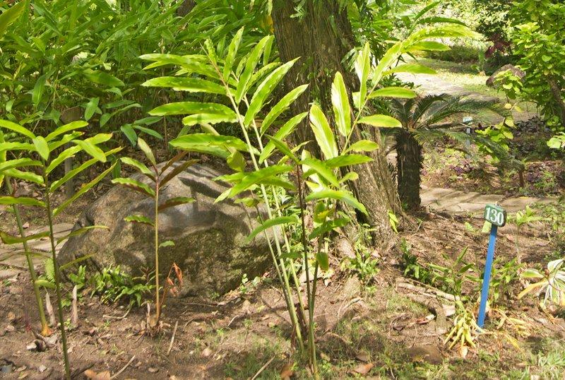 large_Mamiku_Gardens_72.jpg