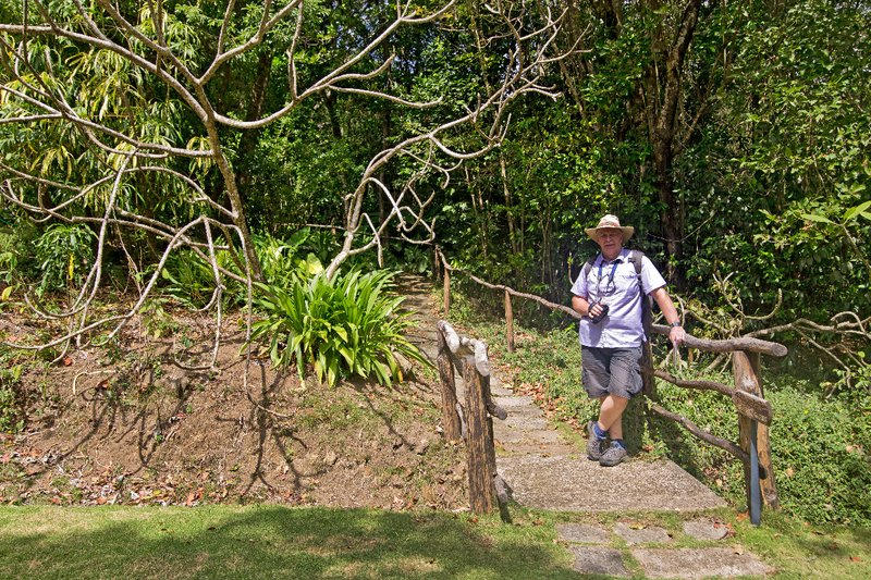 large_Mamiku_Gardens_74.jpg