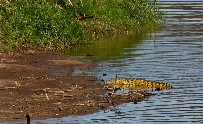 large_Mara_River..-_Crocodile.jpg