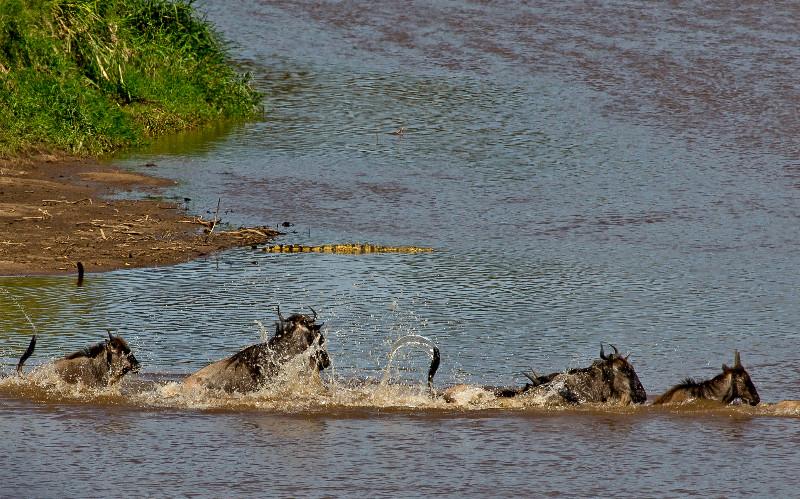 large_Mara_River..ing___3__14.jpg