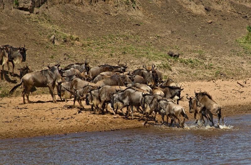 large_Mara_River..ing___3__15.jpg