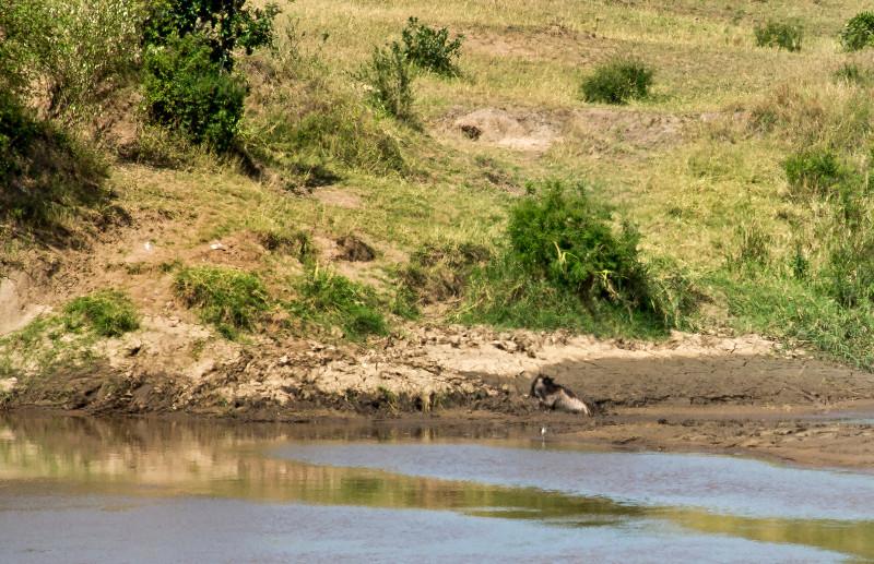large_Mara_River..ing___3__17.jpg