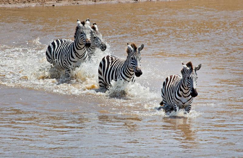 large_Mara_River..sing___1__8.jpg