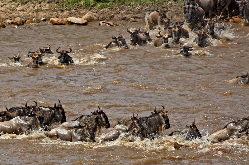large_Mara_River..sing___3__1.jpg