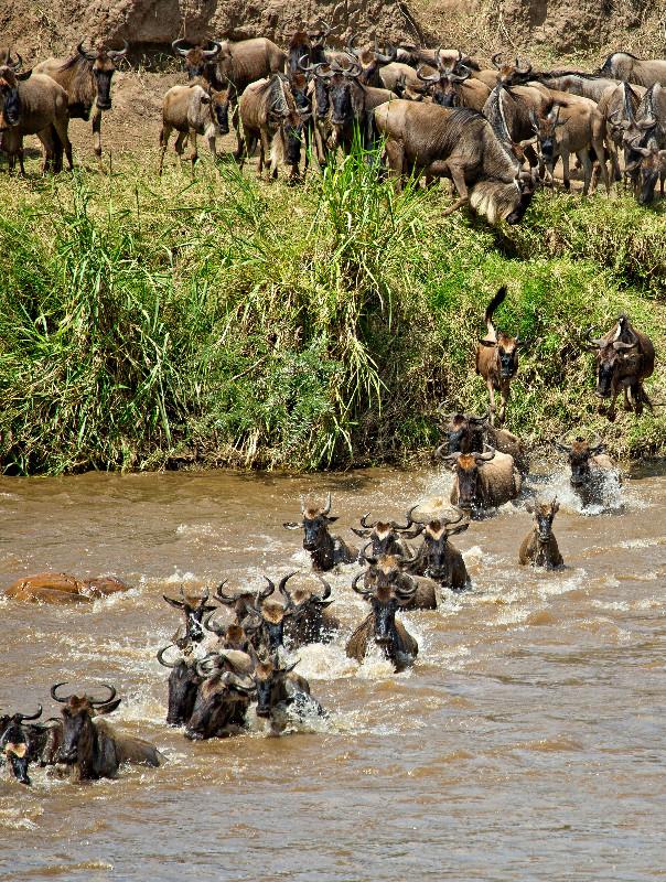 large_Mara_River..sing___3__2.jpg