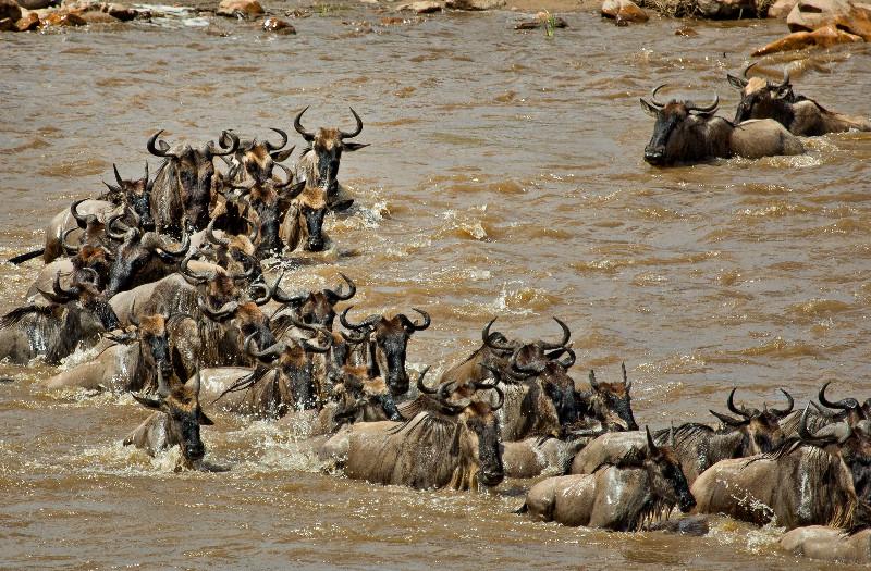 large_Mara_River..sing___3__3.jpg