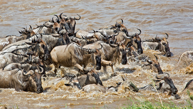 large_Mara_River..sing___3__6.jpg