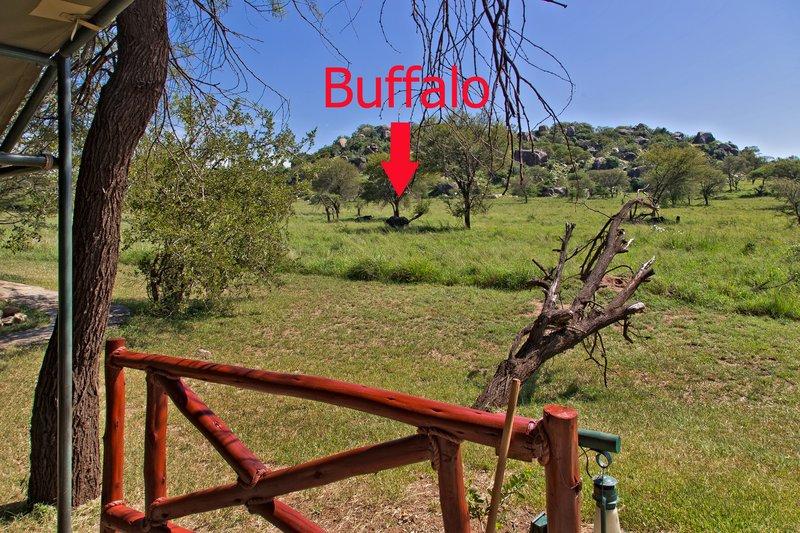 large_Mbuzi_Mawe..uffalo10-54.jpg