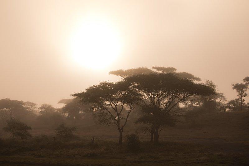 large_Misty_Morning_8.jpg