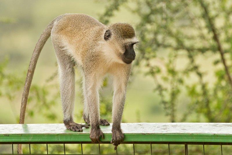 large_Monkey__Bl..ic_Site__11.jpg