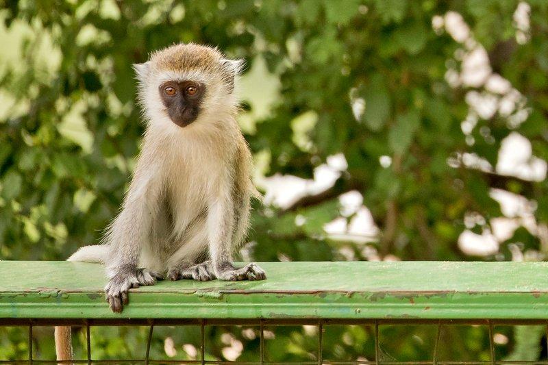 large_Monkey__Bl..ic_Site__17.jpg