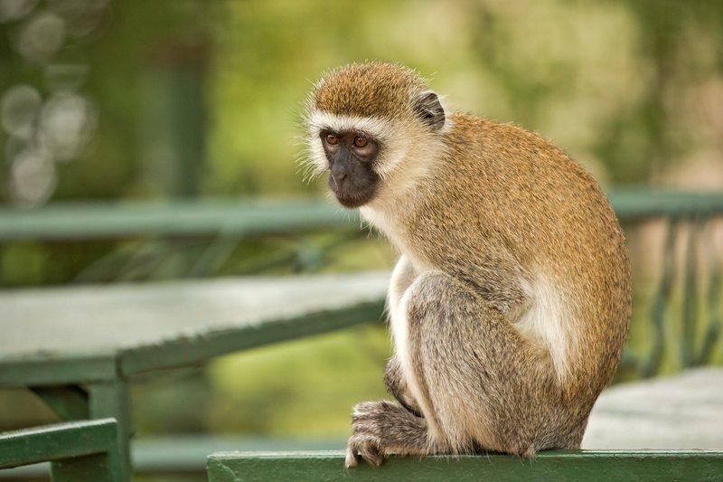 large_Monkey__Bl..nic_Site__8.jpg