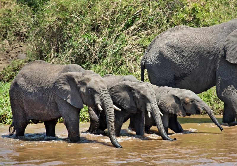 large_More_Elephants_2.jpg
