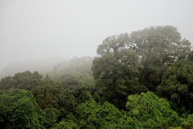 large_Ngorongoro.._the_Rim_17.jpg