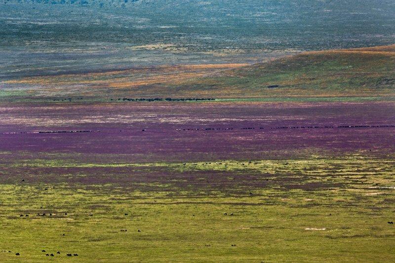 large_Ngorongoro..ent_Road_22.jpg