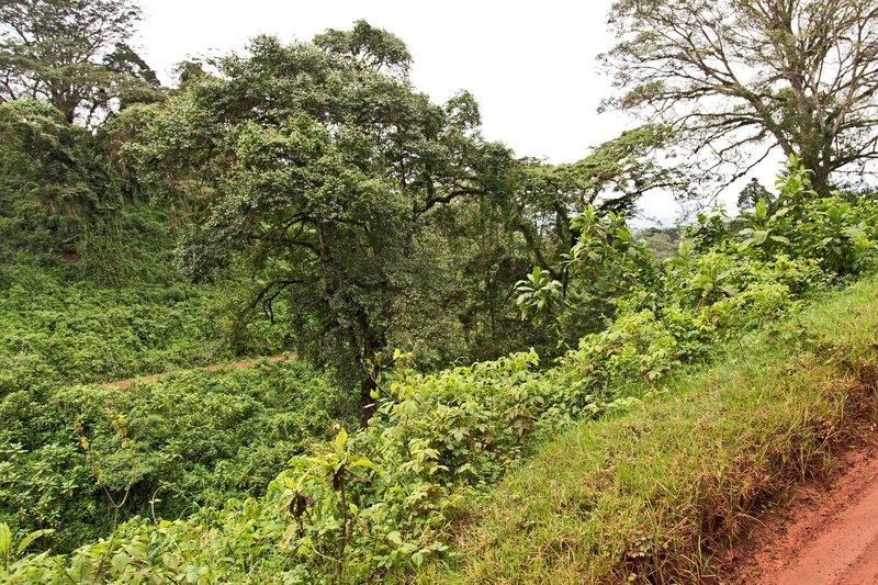 large_Ngorongoro..o_the_Rim_8.jpg