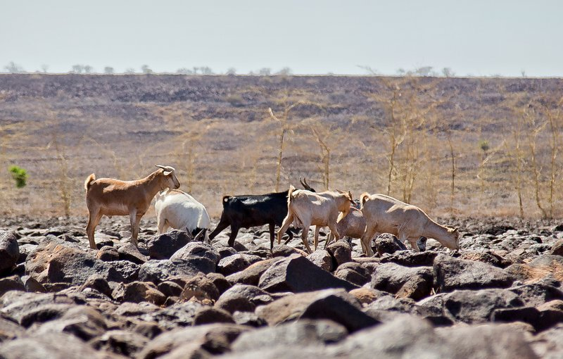 large_North_Horr.._Turkana_37.jpg