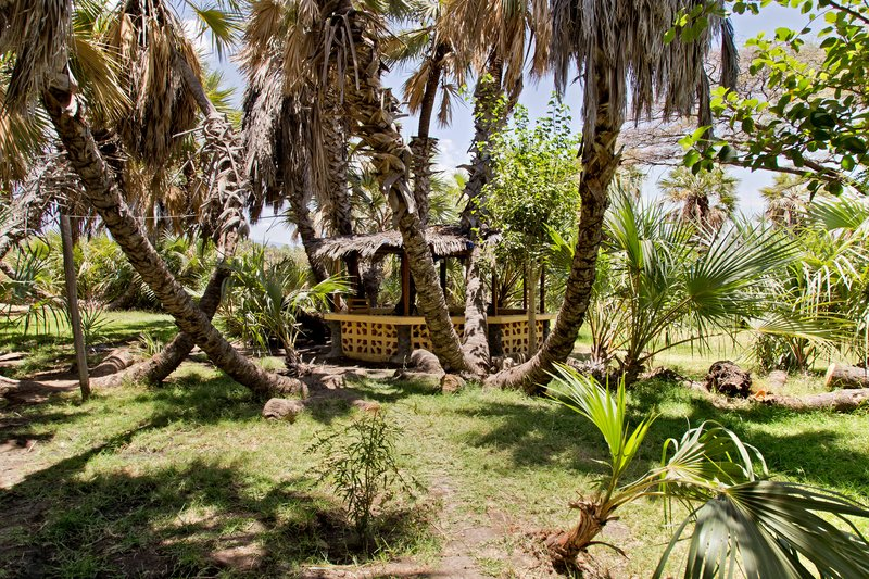 large_Palm_Shade_Camp_10.jpg