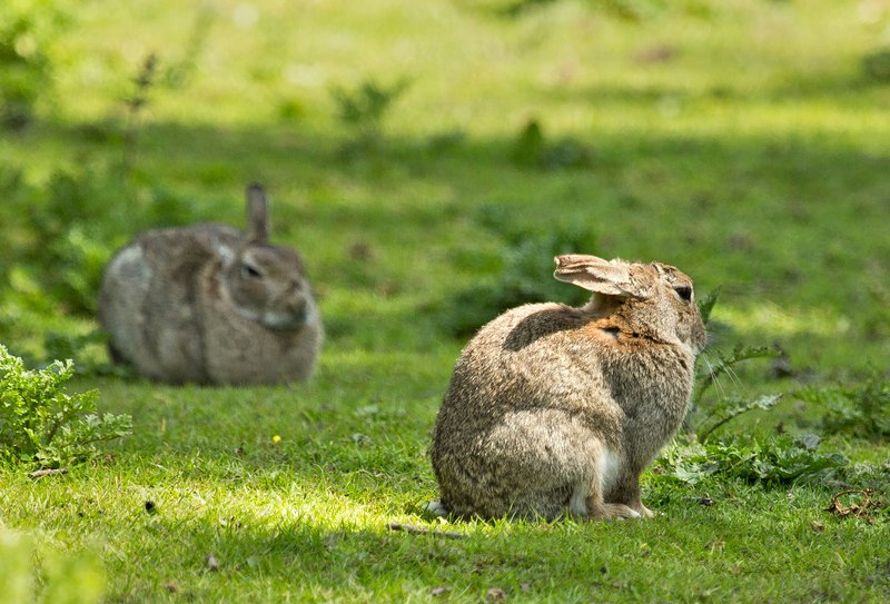 large_Rabbits_1.jpg