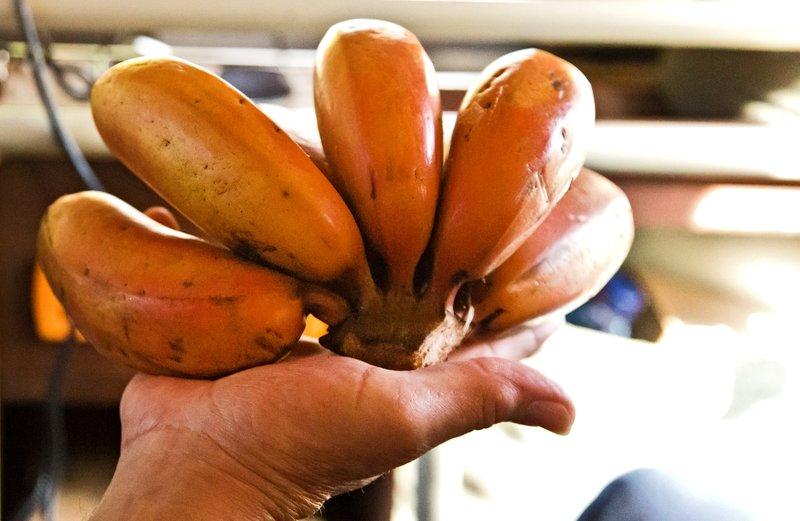large_Red_Bananas.jpg
