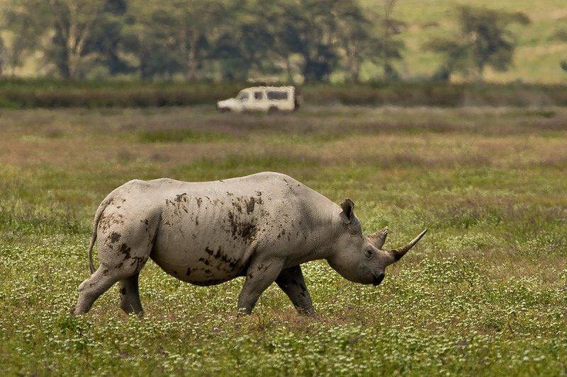large_Rhino_31.jpg