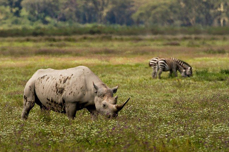 large_Rhino_32.jpg