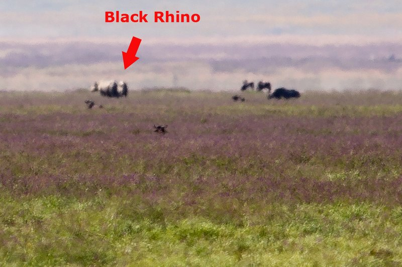 large_Rhino_6-1.jpg
