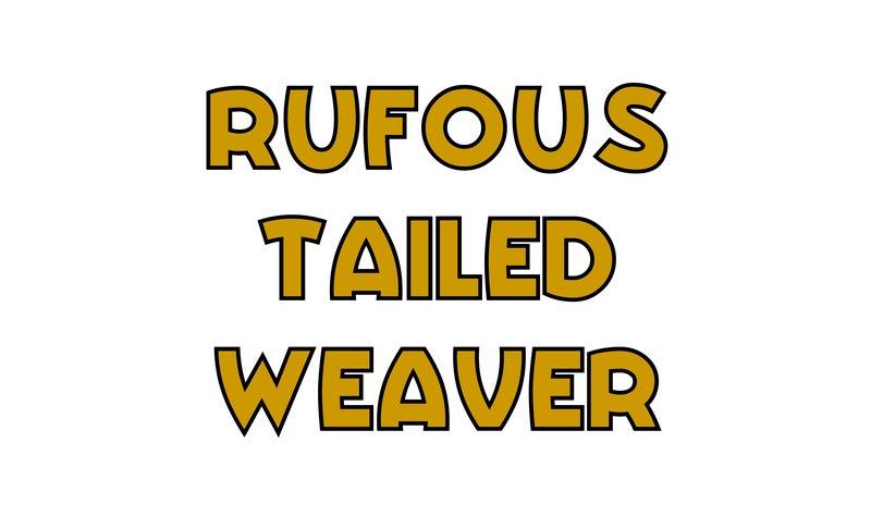 large_Rufous_Tailed_Weaver.jpg
