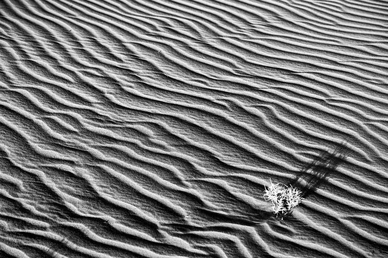 large_Ruso_Sand_Dune_44_B_W.jpg