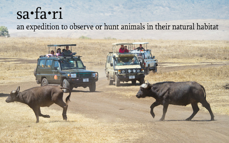 large_Safari_Definition_1.jpg