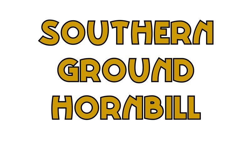 large_Southern_Ground_Hornbill.jpg