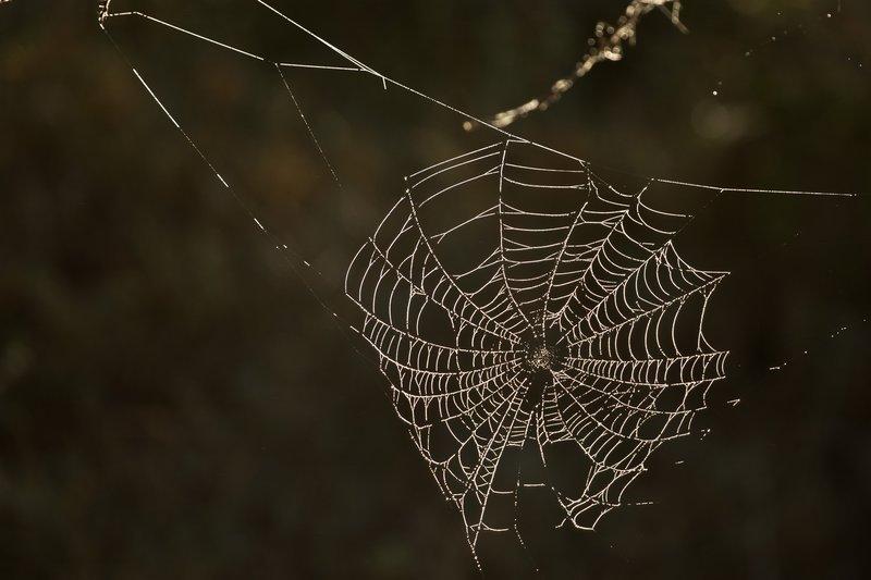 large_Spider_s_Web_1.jpg