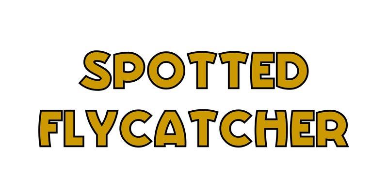 large_Spotted_Flycatcher.jpg