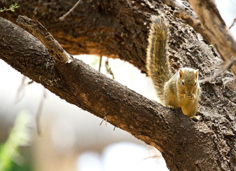 large_Squirrel_1.jpg
