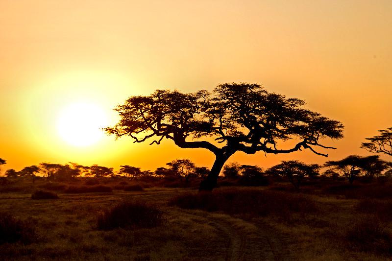 large_Sunrise_over_Ndutu_1.jpg