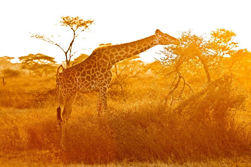 large_Sunrise_over_Ndutu_3.jpg