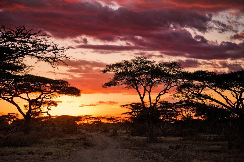 large_Sunset_in_Ndutu_8-14.jpg