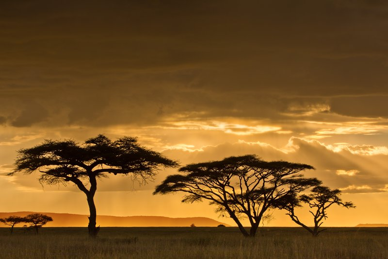 large_Sunset_over_Seronera_21.jpg