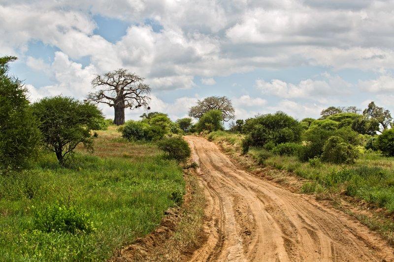 large_Tarangire_Roads_5-1.jpg