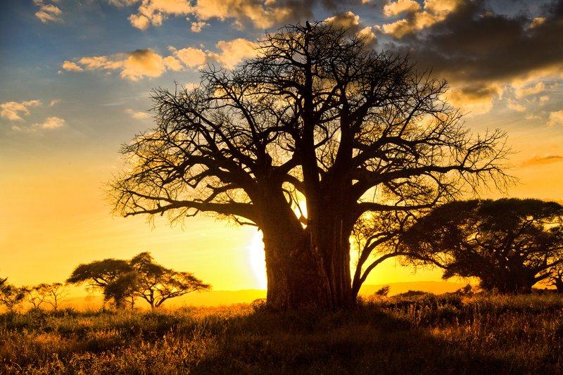 large_Tarangire_Sunset_2016___4.jpg