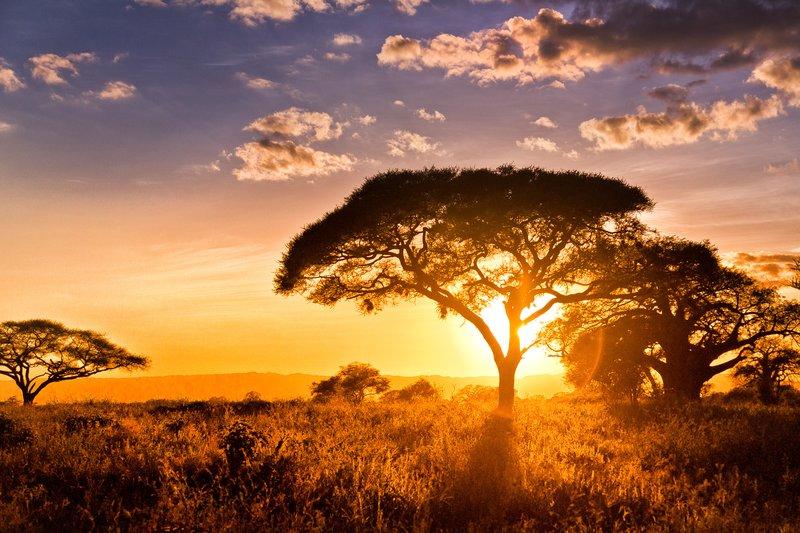 large_Tarangire_Sunset_2016___6.jpg