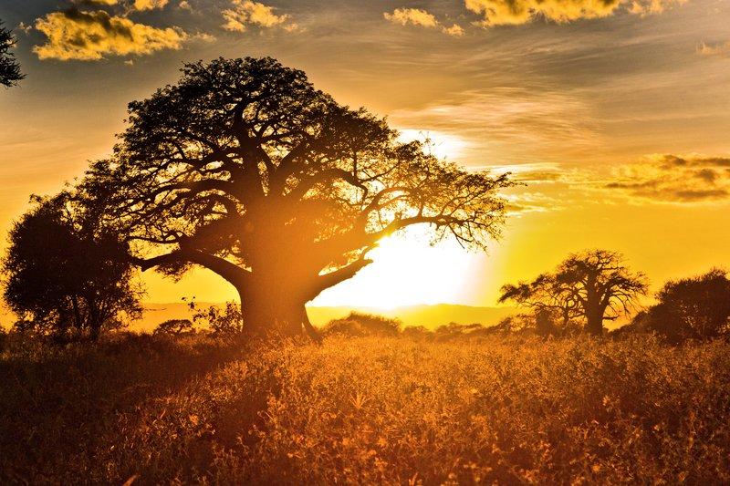 large_Tarangire_Sunset_2016___7.jpg