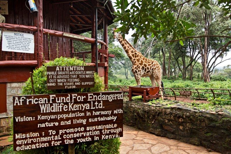 large_The_Giraffe_Centre_10.jpg