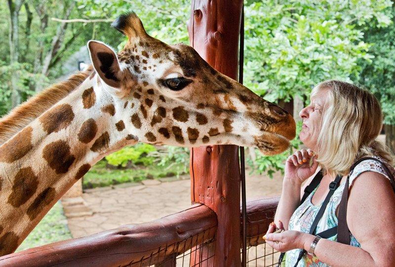 large_The_Giraffe_Centre_17.jpg