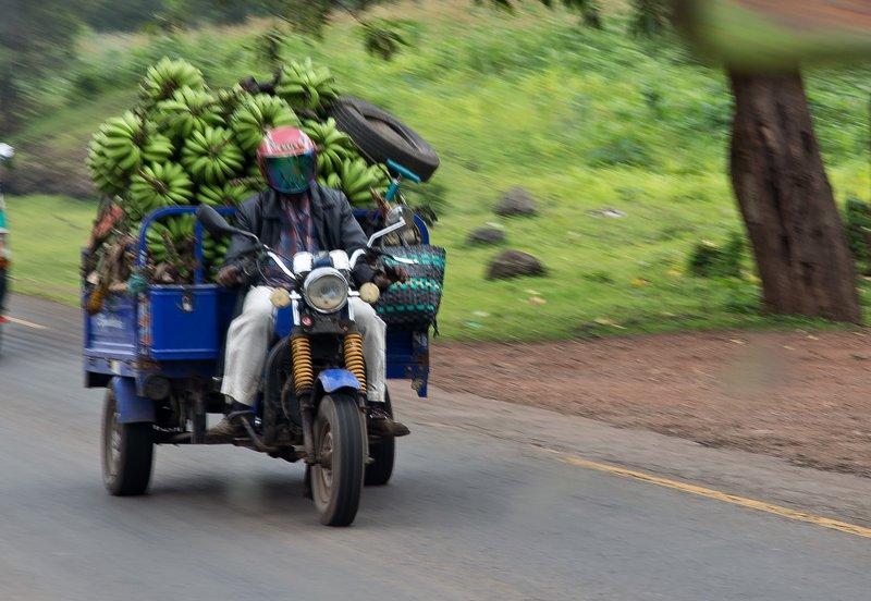 large_Transporting_Bananas_1.jpg
