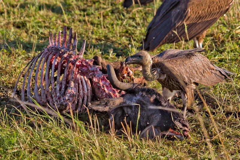 large_Vultures__..Backed_10-4.jpg